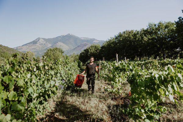 SETE Vini Naturali - Emiliano in Vigna